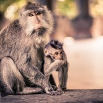 monkey forest ubud bali yoga retreat